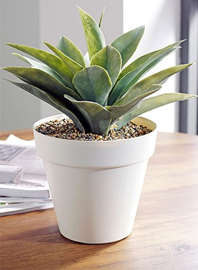 Agave Table Top Planter