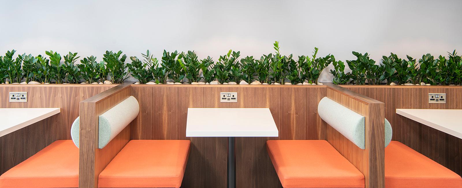 plants v1