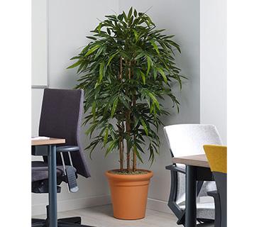Design Plants & Pots