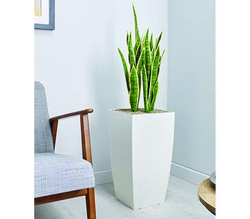 Essential Plants & Pots