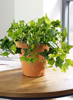 Ivy Table Top Planter