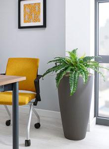design boston fern