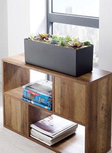 succulent cabinet trough